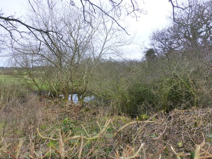 Hedge Pond (Near Rock & River) (SD 49995 16220)