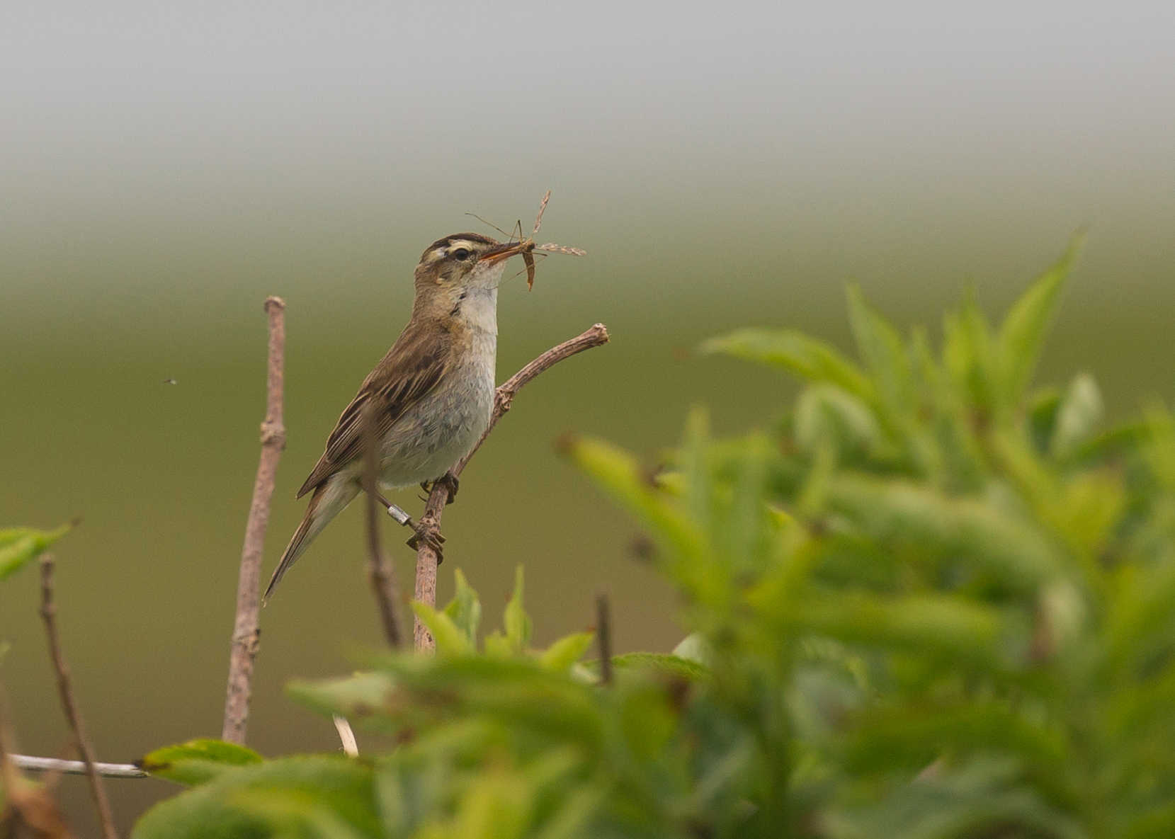 Farmland birds and pond management