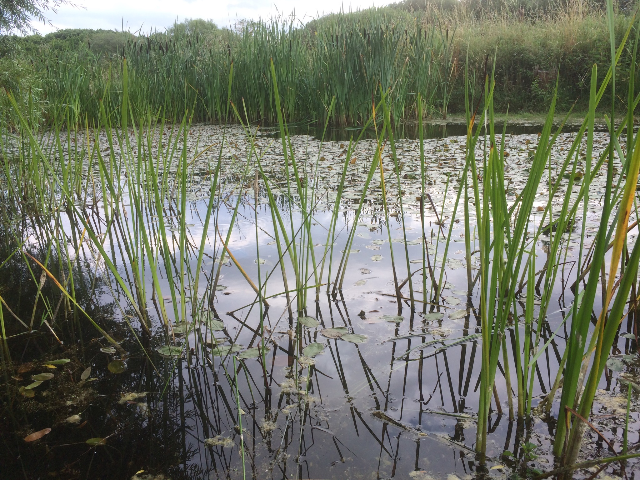 Pond restoration for wildlife: a farmer's personal account